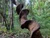 2012-11-04-s100-2081.cr2